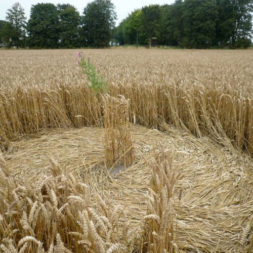 Crop Circle center - Avebury Manor, Wiltshire England - from Patty Greer Films